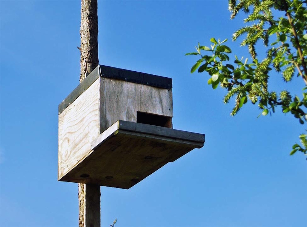 Bird box for barn owls in Maypole Wood, Bold, St.Helens