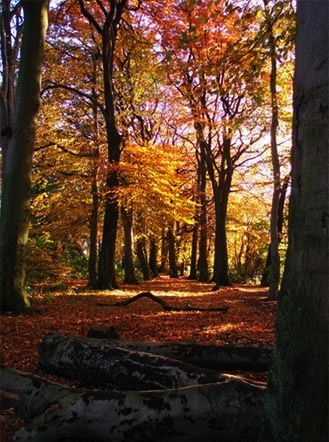 Woodland in Sherdley Park in Sutton, St Helens