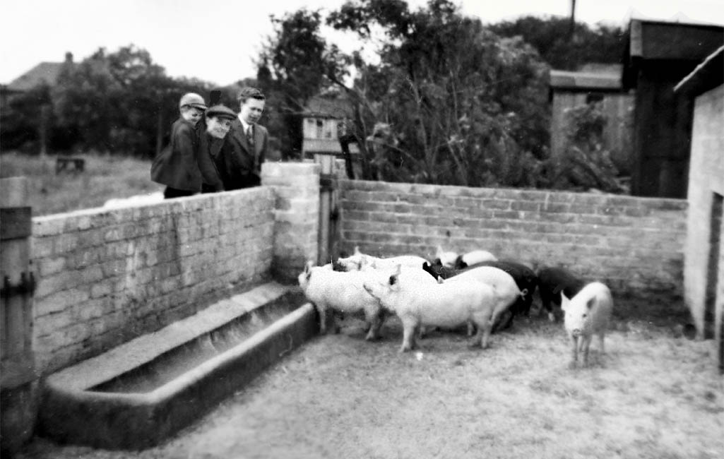 """Pigs"""